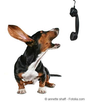 BayLDA veröffentlicht Hotline für Vereine